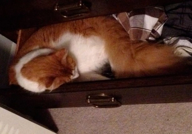 Our post-brawl cat sleeping it off in the boys open drawer.  At least he's eating and drinking and moving around now.