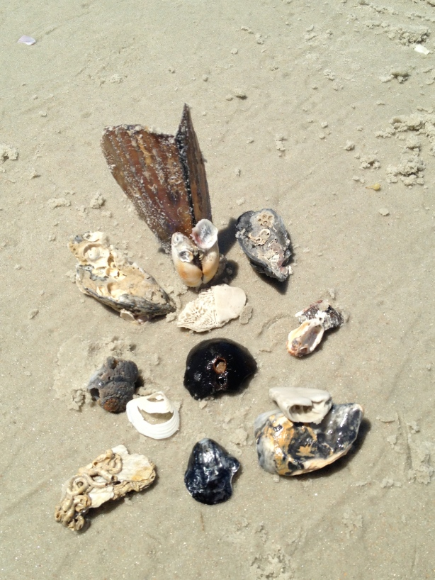 Collecting shells, pieces, parts and organizing them.